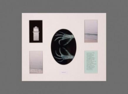 Album 31 - new