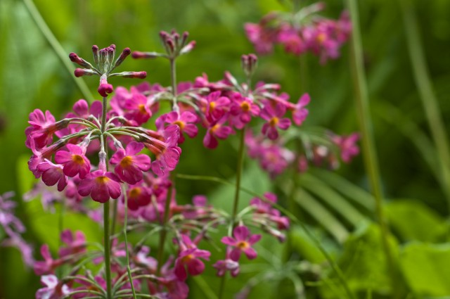 Pink-flower-640x425